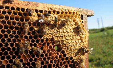 Pszczoły zadbają o nasze zdrowie